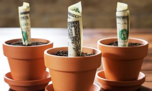 Money planted in different pots